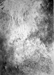 "Fledgling II -  2007 Graphite - 42"" x 29"""