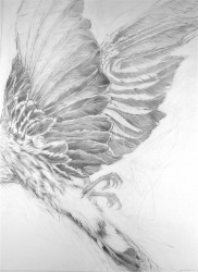 Collateral Damage #1 -  2007