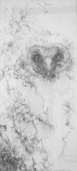 Drawing of Baby Owls