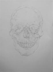 """Head    2013 Graphite -  48"""" x  22"""""""