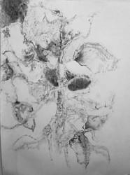 "Untitled   2013 Graphite    50"" X 24"""