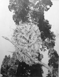 """Sequoia Visitor  2013-2014 monotype   14"""" x 10"""""""